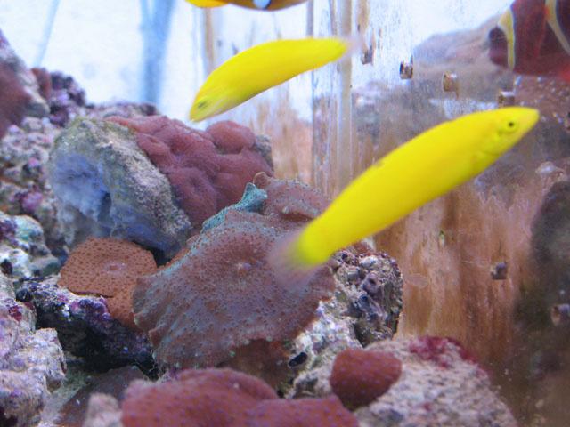 аквариумные рыбки и клев рыбы