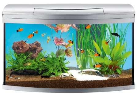 for Aquarium pour poisson rouge villaverde